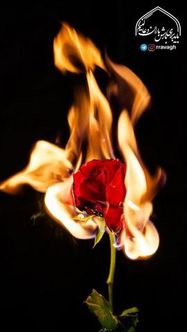 گل رُز