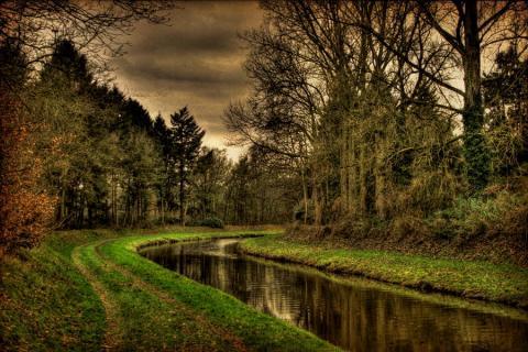 جنگل و رودخانه